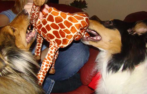 Smillas giraff