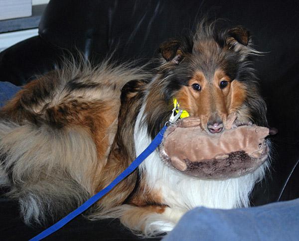 Bessie med sin igelkott