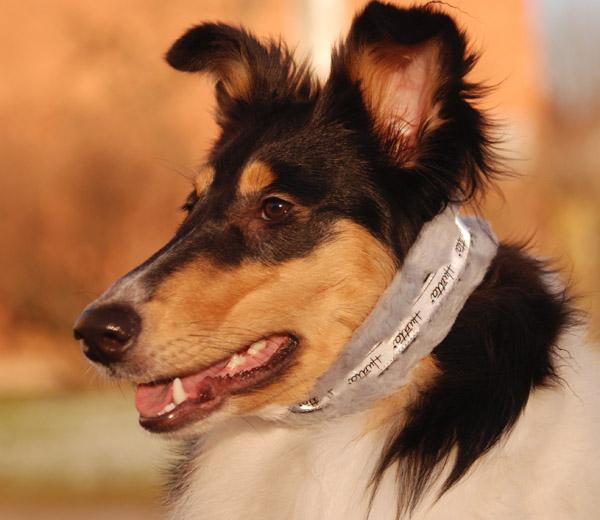 Smilla i sitt nya halsband