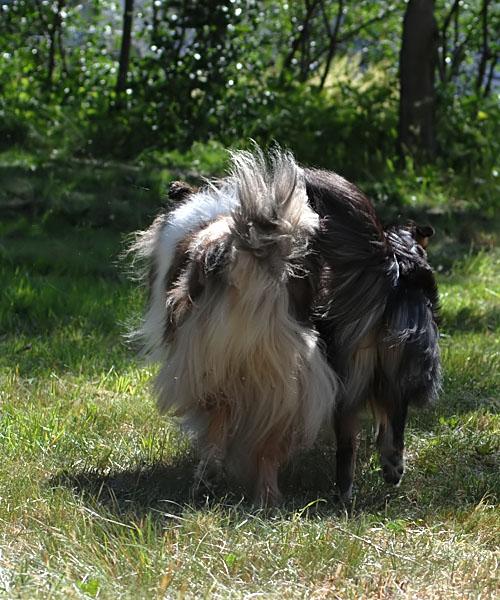 Bessie & Smilla