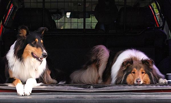 Smilla & Bessie i bilen