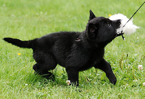 qaxi_puppy_tuss1