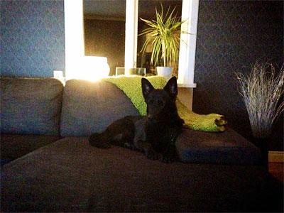 Qaxi i soffan