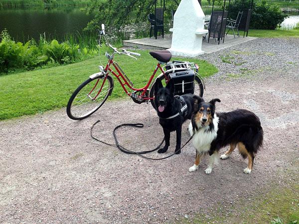 Cykeltur med hundarna