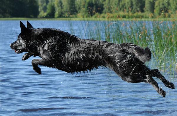 Qaxi hoppar i vattnat