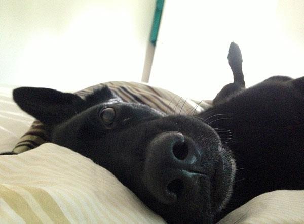 qaxi i sängen
