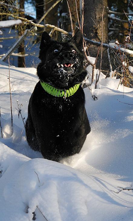 Qaxi i snön!