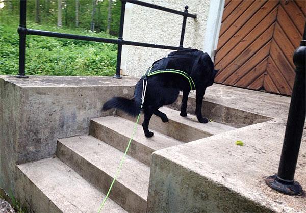 Spårar på trapp