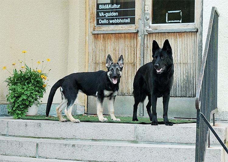 Rusa och Qaxi väntar vid jobbet