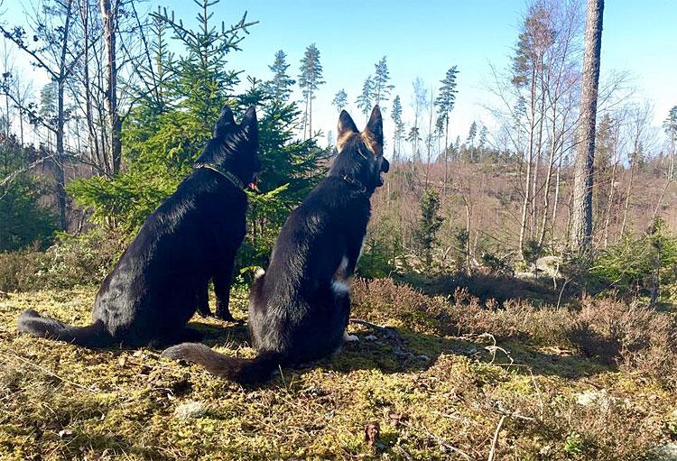Qaxi & Rusa på promenad