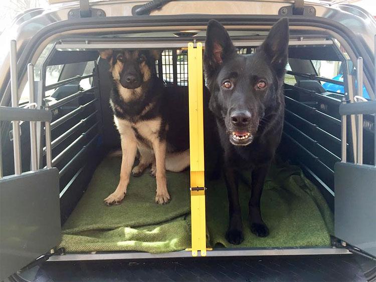 Rusa och Qaxi i bilen